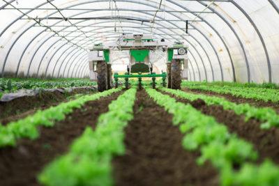 decreto rilancio agricoltura - trs consulting