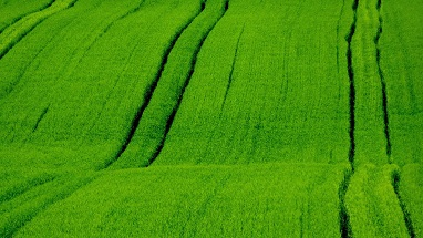 ismea cambiale agraria 2 - trs consulting