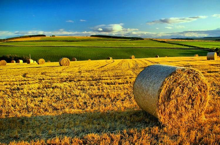 agricoltura ismea 200.000 euro - trsconsulting